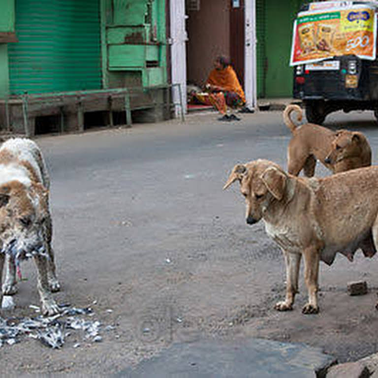 Opra Animal welfare organization - Animal Control Service in Coimbatore