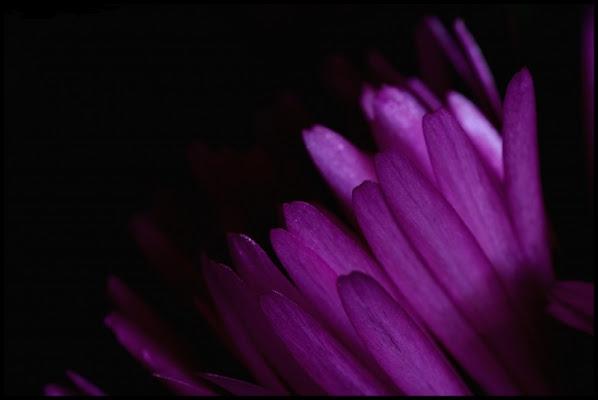Purple In The Dark di comix84