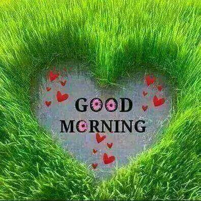Good Morning Have a Nice Day Gif Apk by Smart Apps Inc  - wikiapk com