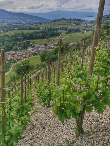 Savoie Terroir - Savoie wine - Domaine Yves Girard-Madoux - Vignoble de la Pierre - Chignin Bergeron - Echalas - Vin de Savoie