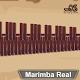 royal marimba