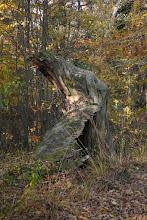 Photo: Pokój - połamane drzewko obok stawu hodowlanego jesienią
