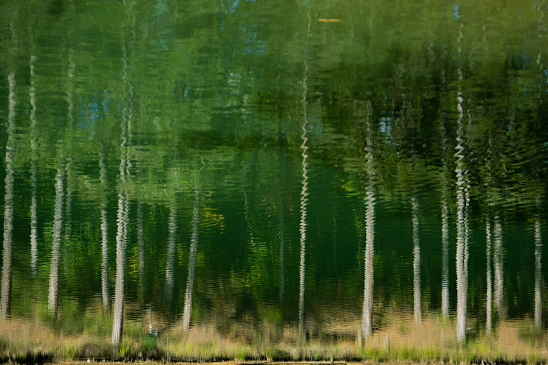 painted forest di aelisamariotti