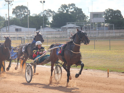 Stacey Weideman drives the Lola Weidemann-trained Fours Enuf Tas to victory in the Narrabri Cup on Sunday. It was Stacey's second cup win in a week, after she drove Readily to a Wee Waa Cup victory on Sunday, February 26. Trailing Fours Enuf Tough are the Chris Shepherdson-driven Gotta Feeling (left) and Mitrhys Magic.