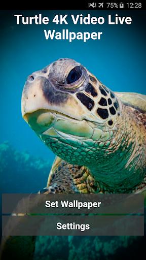 거북이 4K 라이브 배경 화면