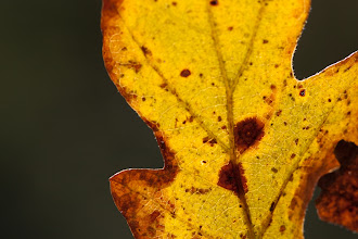 Photo: Leaf and Light, plate 2