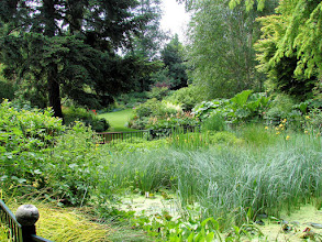 Photo: Looking across PowellsWood pond to perennial borders garden