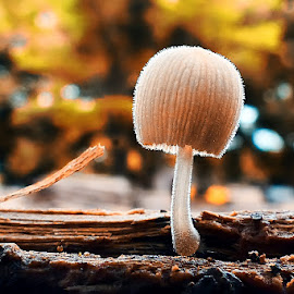 alone... by Kawan Santoso - Nature Up Close Mushrooms & Fungi