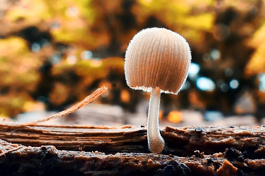 alone... by Kawan Santoso - Nature Up Close Mushrooms & Fungi