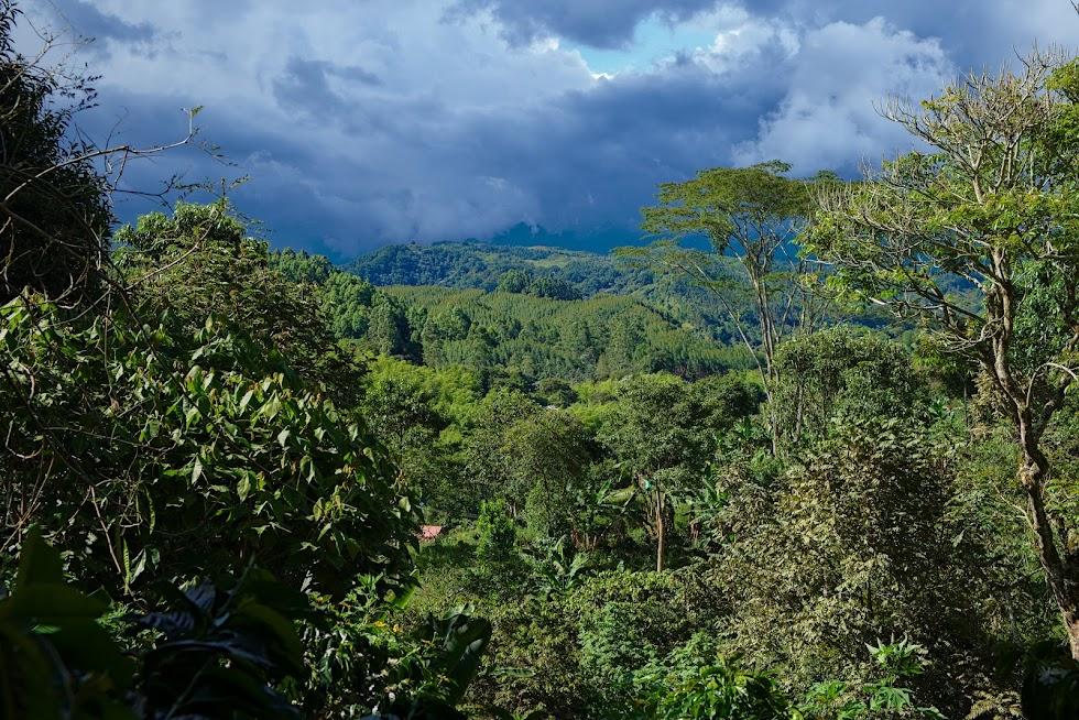 Kolumbia rejony kawowe