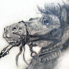 horse by Ganesh LK - Drawing All Drawing ( horse, drawing, graphite, pencil, hand )