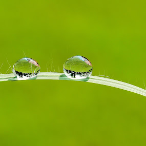 by JL Tan - Abstract Water Drops & Splashes ( water, macro, waterdrops )