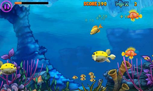 Fish Feeding Frenzy 5