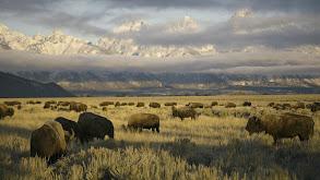 Yellowstone & Yosemite thumbnail