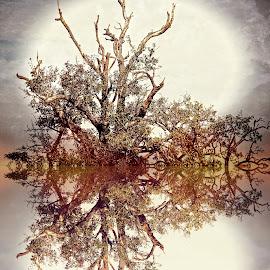 Digref 123 by Michael Moore - Digital Art Things