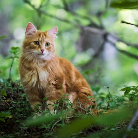 by Crazy  Photos - Animals - Cats Portraits