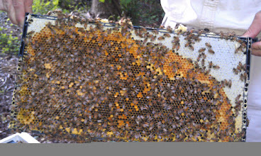 Photo: brood that has emerged, bakfilled with pollen and new eggs