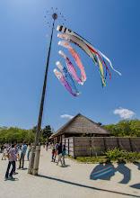 Photo: Koinobori at Hitachi Seaside Park