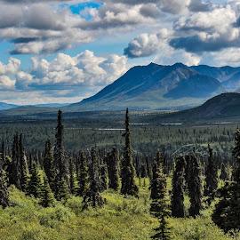 Eureka View by Patricia Phillips - Landscapes Travel ( alaska eureka summer )