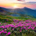 Mountain Flower Live Wallpaper APK