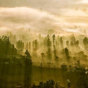 Morning Rays Over Kintamani by Hendri Suhandi - Landscapes Mountains & Hills ( hills, bali, mountain, kintamani, village, fog, forest, sunrise, travel, sun rays, rays )