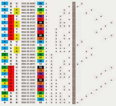 Photo: T/U = 00,   C = 01,   A = 10,   G = 11.  The (32-63) RNA base-2 cross section patterns in the above chart depict the overall dominant color of the codon. The color of the bases is expressed in the codon base color columns.  Blue 1 and 32 are binary (base2) mirrors in a 6 place fractal base2 system. Yellow 2 and 16 are binary base2 mirrors in a 6 place fractal base2 system. Red 4 and 8 are binary (base2) mirrors in a 6 place fractal base2 system.  A codon whose dominant color is orange, purple or green is the result of two primary color column active place values being switched on creating the mathematical dominant secondary color.