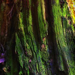 Greenbark by Juliusz Wilczynski - Nature Up Close Trees & Bushes