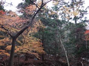 鈴鹿川の紅葉