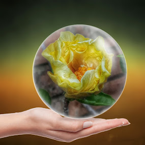 Flower in a Lens Ball by Elna Geringer - Artistic Objects Glass