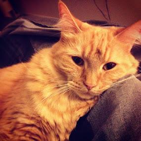 Armani is ready for bedtime!  #cat by Tyler Landgraf - Instagram & Mobile Instagram