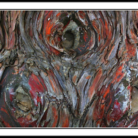 by Isaac De Jesus - Nature Up Close Trees & Bushes ( patterns, tree, nature, expressionism, art, tree knots )