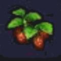 イチゴ(ビルダーハンマー)