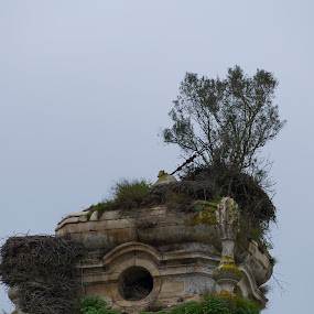 Mosteiro de Seiça by Edu Marques - Buildings & Architecture Decaying & Abandoned ( old house, old, tower, architecture, antique, olives )