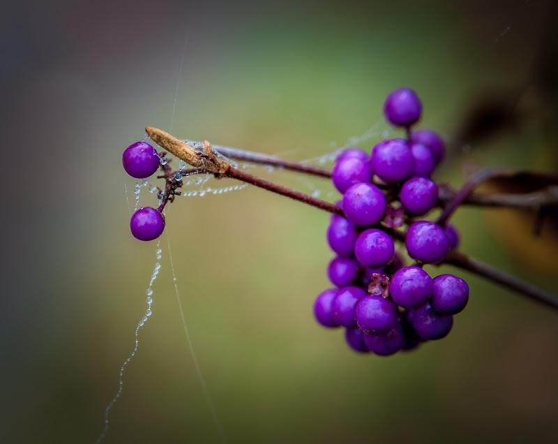 Purple Berries di Ione