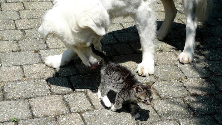 il mio cane e gatto di lorenzo_davighi