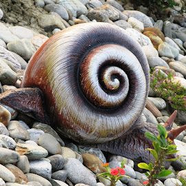 STONE SNAIL by Tina Banik - Artistic Objects Other Objects ( snail, nature, stone, object,  )