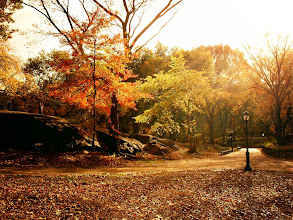 "Photo: ""Adagio...""  New York Photography: Autumn. Central Park.  It's in the way the sunlight streams through the last vestiges of autumn: as golden as the leaves that hold onto their branches.  It's in the way the earth bares itself under this fanfare: as vulnerable as new lover's heartbeats buried under layers of clothing.  Winter's prelude starts slowly: a distant refrain that works its way through the earth chilled in anticipation.  We slow-dance on this mortal coil to the adagio of life twisting and turning with the whims of the winds that scatter our spirit to the ends of the earth.  It's all we can do.    You can view this post along with info about prints of this image if you wish at my site here:  http://nythroughthelens.com/post/13136951998/autumn-light-through-trees-central-park-new-york    Tags: #writing #photography #poetry #prose #newyorkcity #centralpark #autumn #nyc #newyorkcityphotography #nature #landscape"