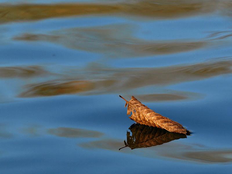 galleggiando lentamente di tispery
