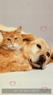 Kočky a Psi Živé Tapety