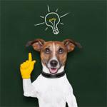 les IRM cérébrales de chiens