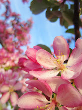 Photo: Pink blossoms at Cox Arboretum and Gardens Metropark in Dayton, Ohio.