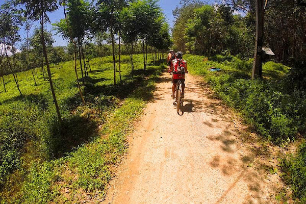 Cycle through the lush, subtropical countryside of Krabi