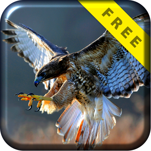 Hawk Attack Live Wallpaper