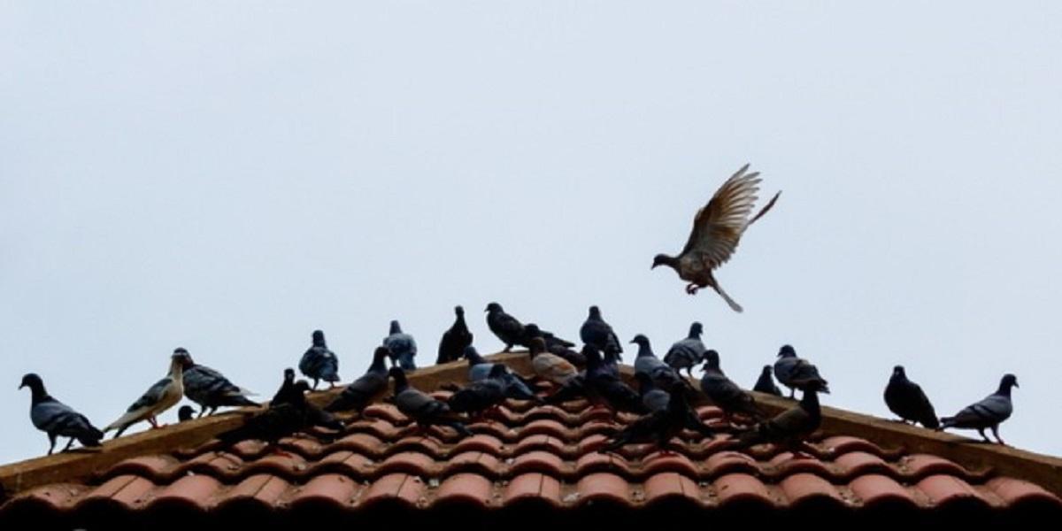 Pássaro em cima de telhado  Descrição gerada automaticamente