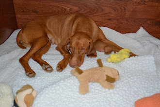Photo: Lila is still pretty tired