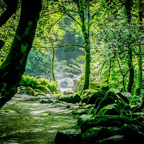 torc waterfall by Guy Henderson - Landscapes Forests ( ireland, killarney, nature, green, waterfall, trees, kerry, forest,  )