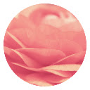 Pink Rose HD Wallpapers Flowers New Tab Theme