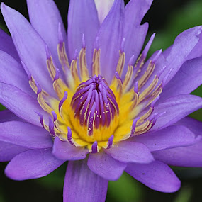 flower by Caraka Pamungkas - Nature Up Close Flowers - 2011-2013