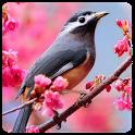 Bird Wallpaper icon
