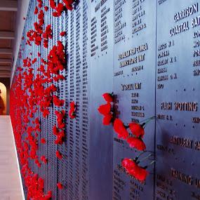 Australian War Memorial by Megan Whitehead - Buildings & Architecture Statues & Monuments